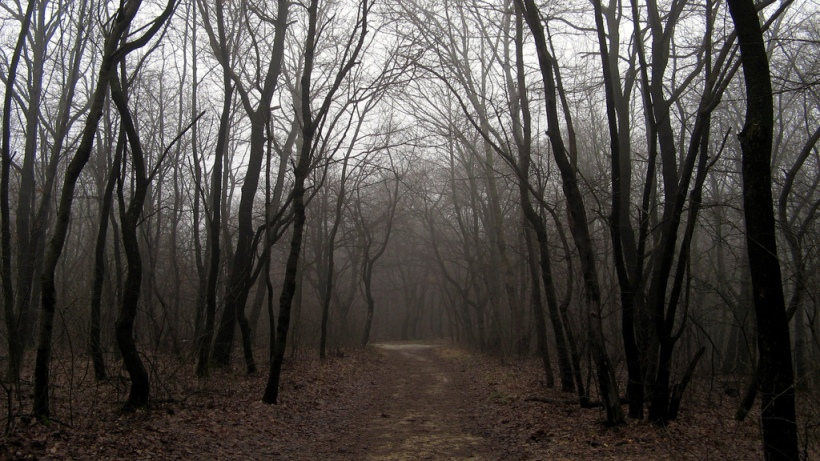 Lost in a dark wood Photo by Lisbeth Salander, via Flickr, CC-BY-NC 2.0